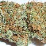White-Berry-Marijuana-Bud