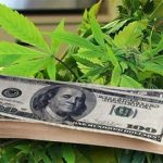 bill-gives-states-marijuana-tax-power-thcf