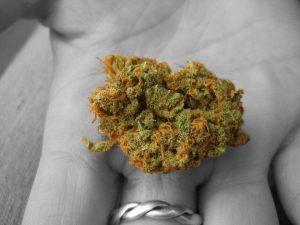 cannabishand