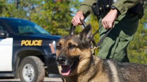 Police-dog-via-Shutterstock-615x345