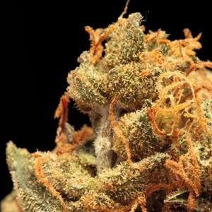 sleepapneacannabis