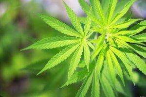 medcannabis