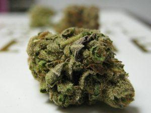 God Bud Strain | Cannabis Directory | Strains