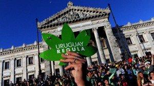 uruguaycannabis