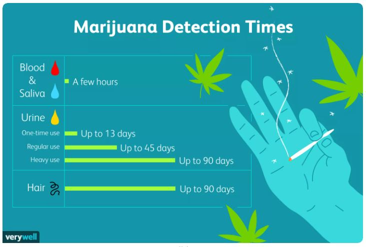 Cannabis duration in body