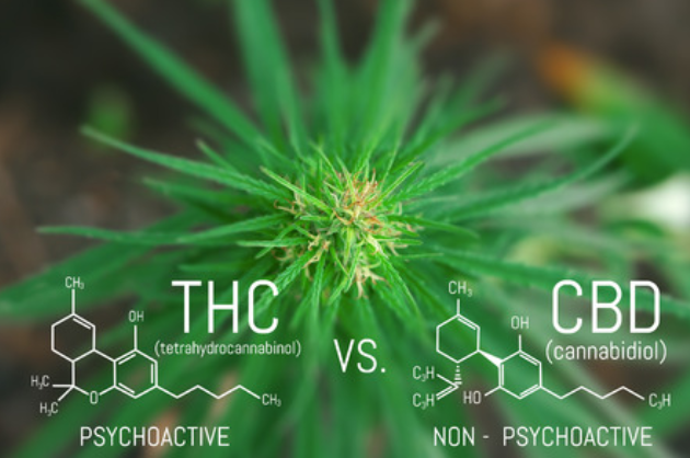 THC chemical Breakdown